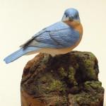 Bluebird on Moss