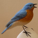 Bluebird on Fence Post