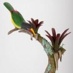 Green Aracari