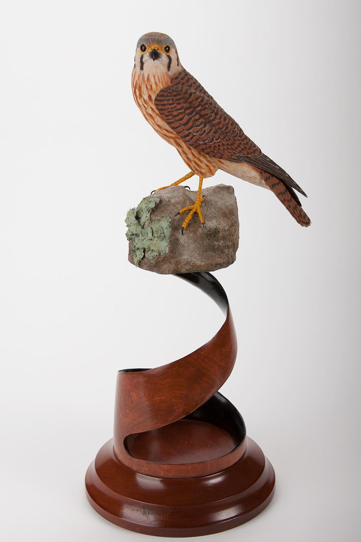 Female Kestrel on Rock